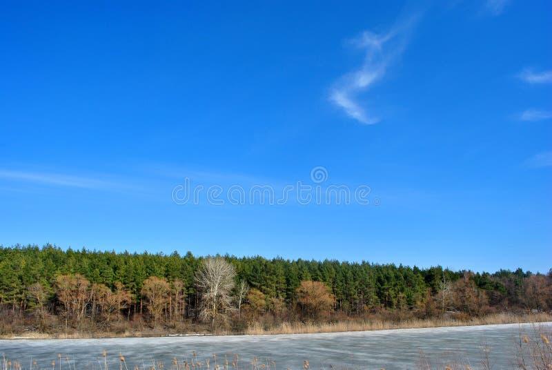 Forêt de pin, saules sur les collines, roseaux putréfiés sur le rivage du lac avec de la glace de fonte, sur un fond de ciel bleu image libre de droits