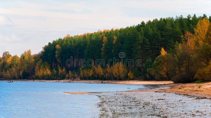 Forêt de pin sur les banques du Volga photo stock