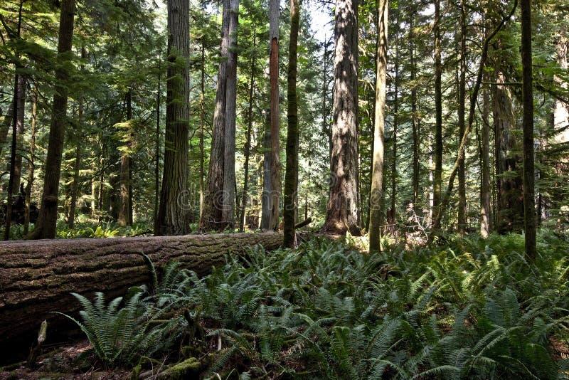 Forêt de plantation de cathédrale photos stock