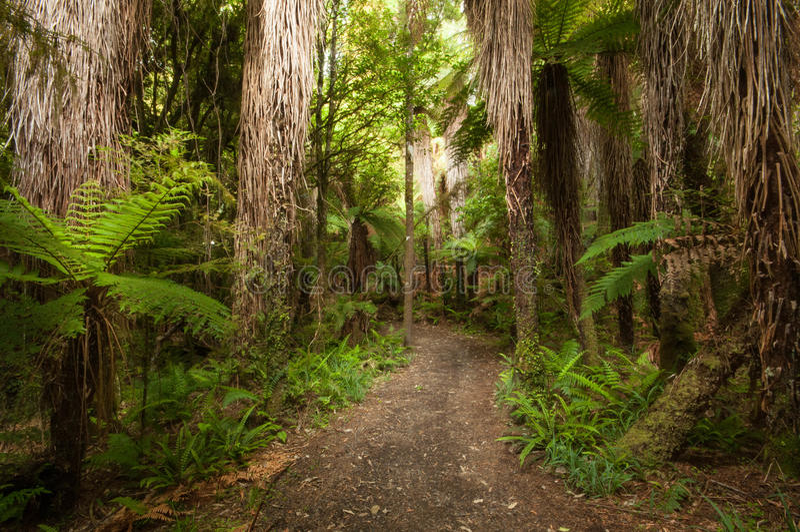 Forêt de Ponga à la vieille promenade de route de car d'Ohakune image libre de droits