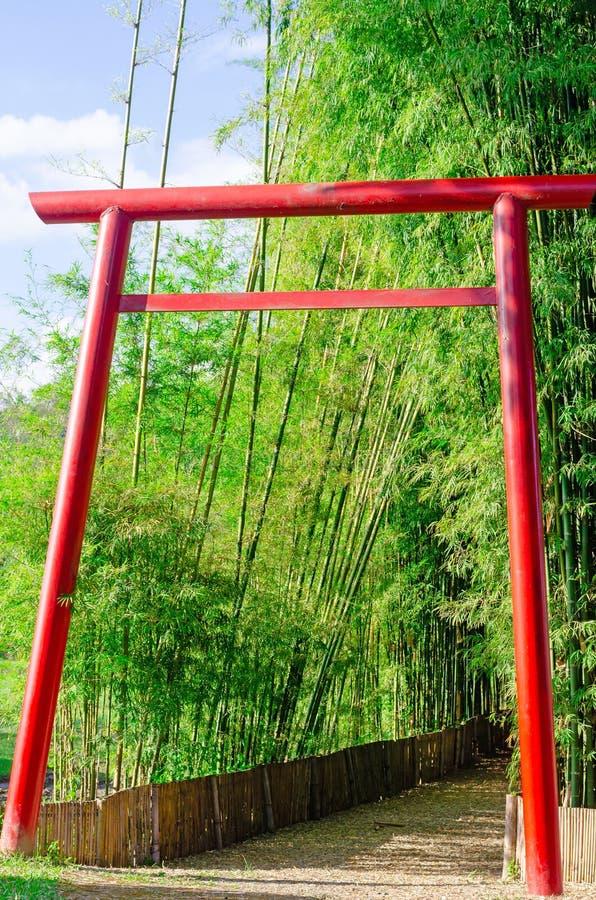 Forêt de porte de Torii et en bambou avec le passage couvert photo libre de droits