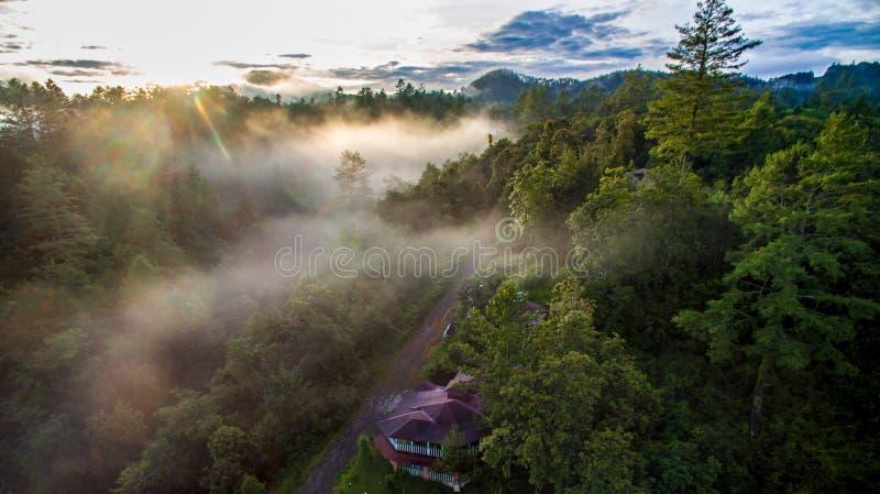 Forêt de Puebla images libres de droits