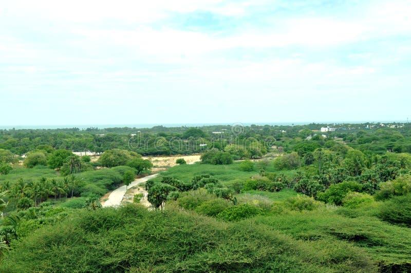 Forêt de rameswaram de vue supérieure images libres de droits