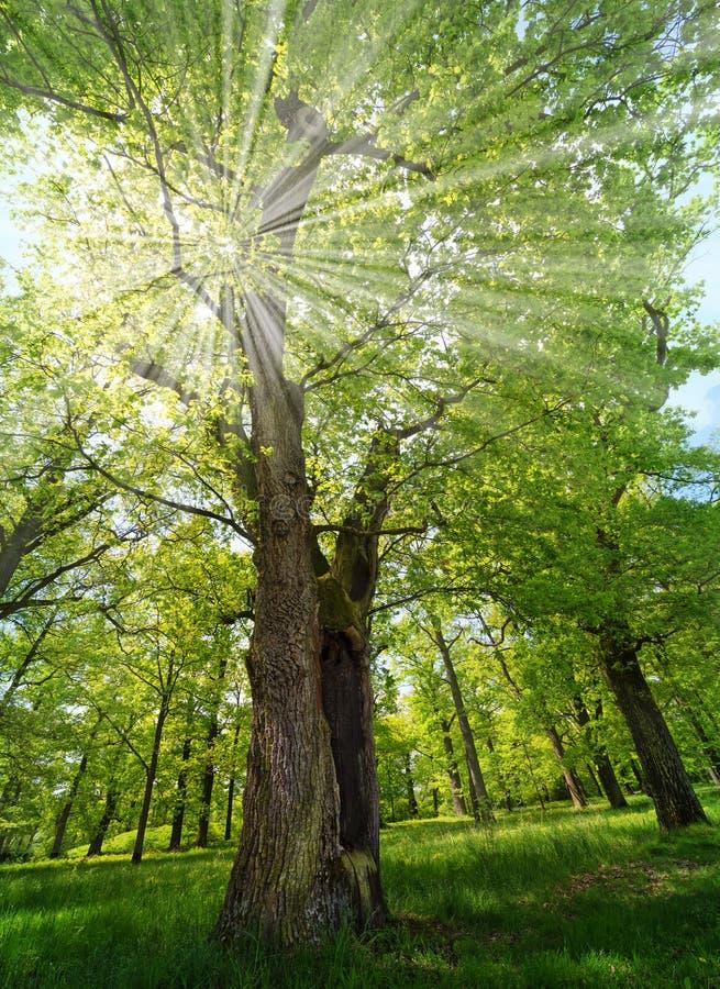 Forêt de ressort photo stock