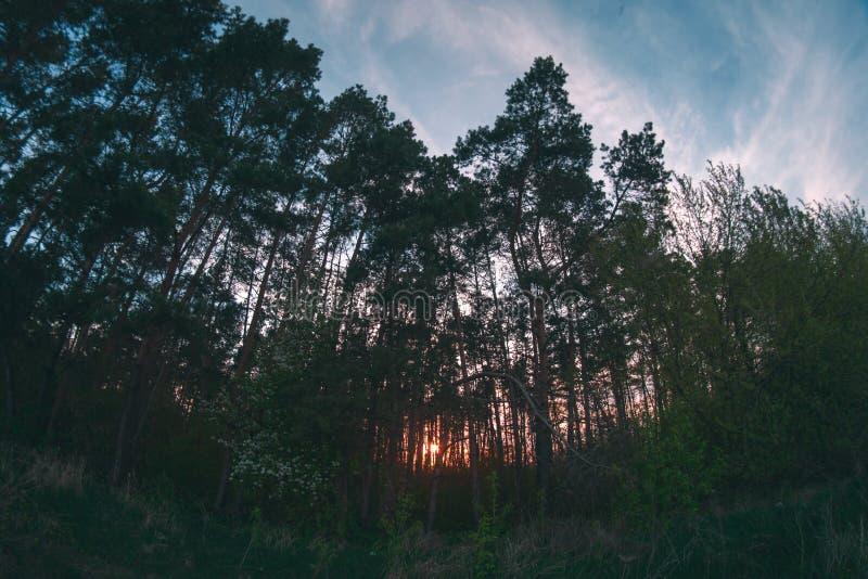 Forêt de ressort de soirée au fisheye de coucher du soleil images libres de droits