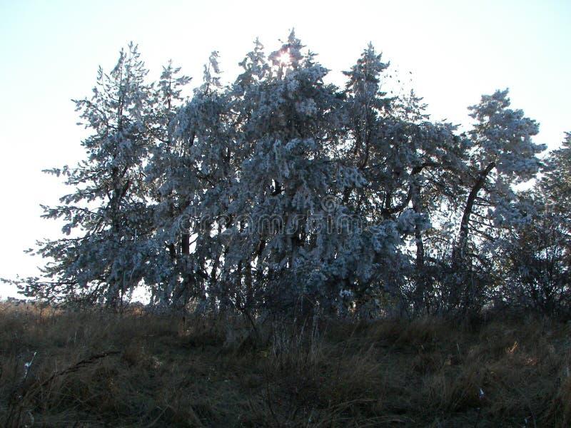 Forêt de ressort pendant le matin dans les montagnes criméennes images stock
