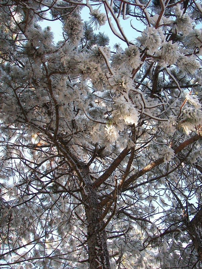 Forêt de ressort pendant le matin dans les montagnes criméennes image stock