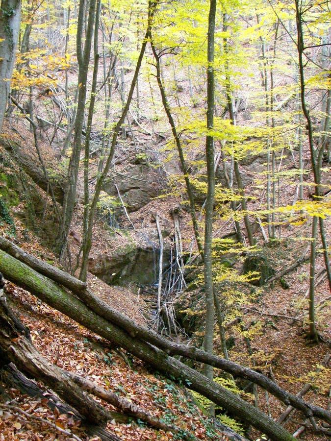 Forêt de ressort pendant le matin dans les montagnes criméennes photographie stock libre de droits