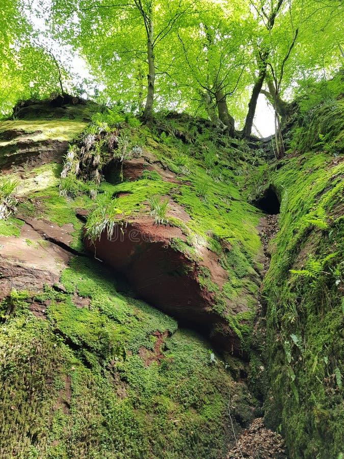 Forêt de rivière de nature image stock