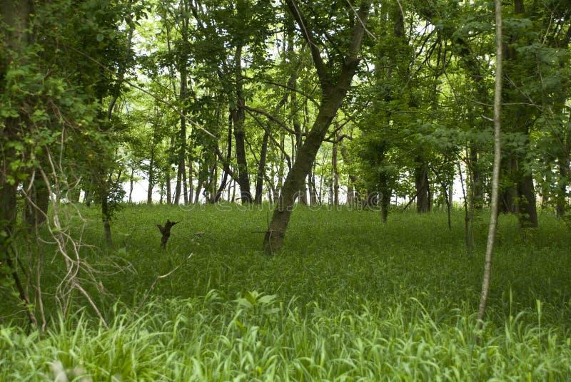 Forêt de rivière de région boisée sur James River photo libre de droits