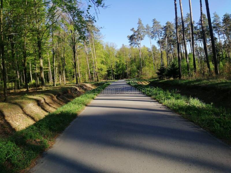 Forêt de rue de ciel en bois de nature photos stock