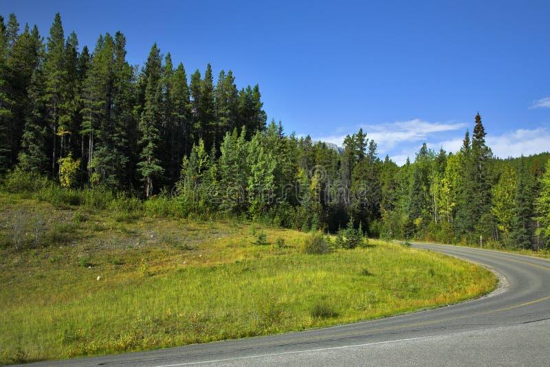 Forêt de sapin en montagnes. image stock