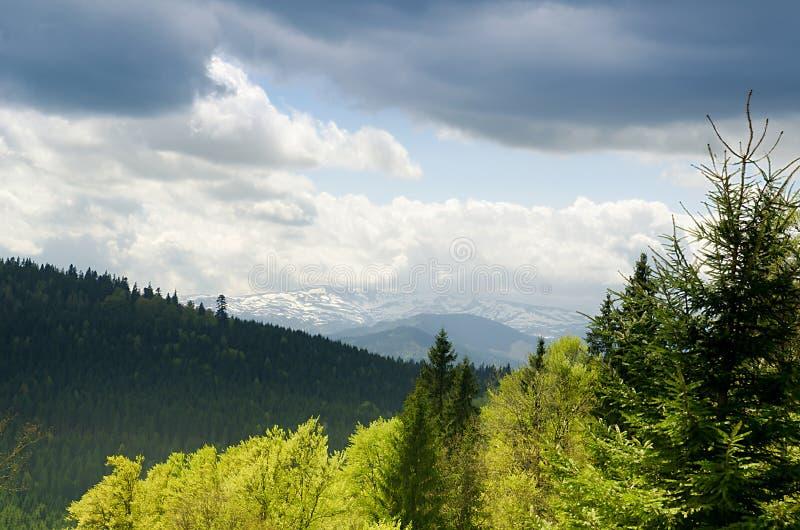 Forêt de sapin, paysage de montagne Carpathien, Ukraine photos libres de droits