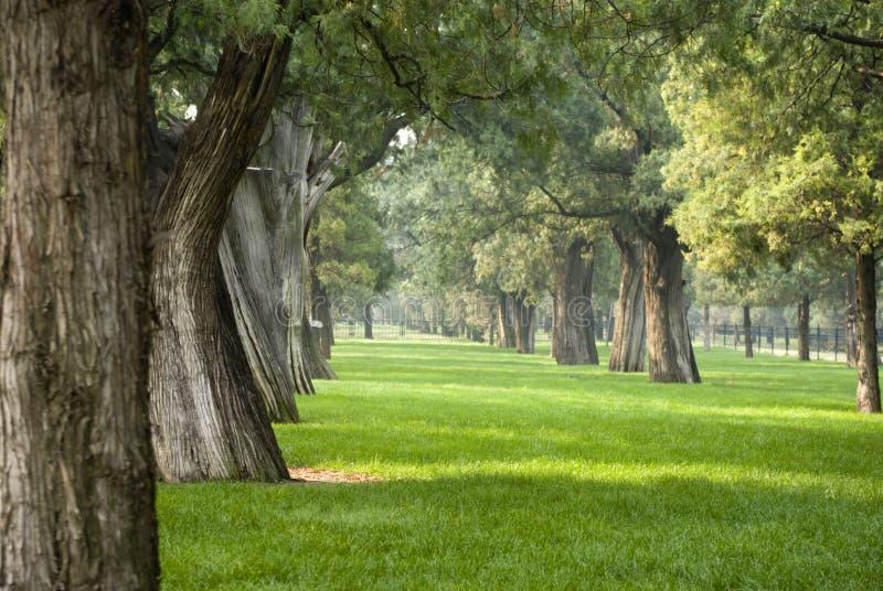 Forêt de Slience photographie stock