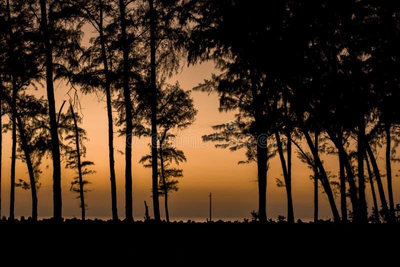 Forêt de soirée, silhouettes noires des arbres coniféres dans la perspective de la promenade de mer avec des tetrapods sous un lu photo stock