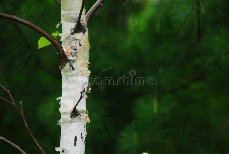 Forêt de source photo stock