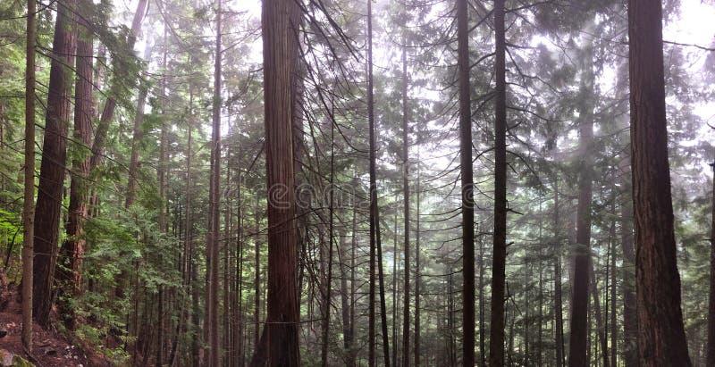 Forêt de Squamish images libres de droits