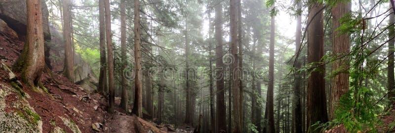 Forêt de Squamish image libre de droits