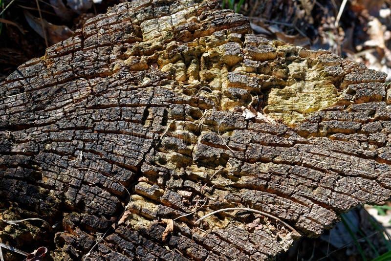 Forêt de tronçon au printemps, bonnes en bois pour le nettoyage de méditation et d'esprit photos libres de droits