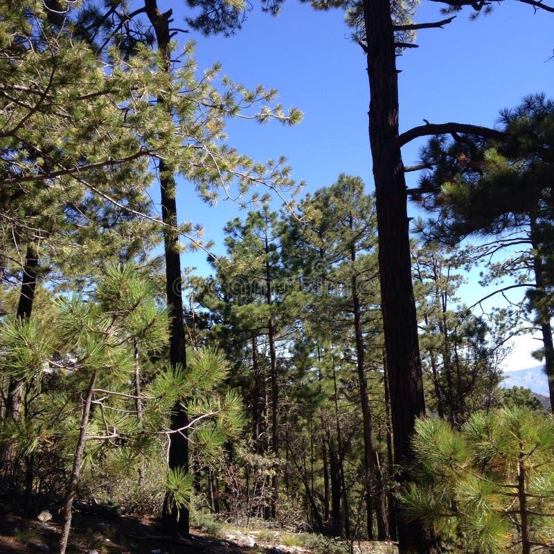 Forêt de Tucson images libres de droits