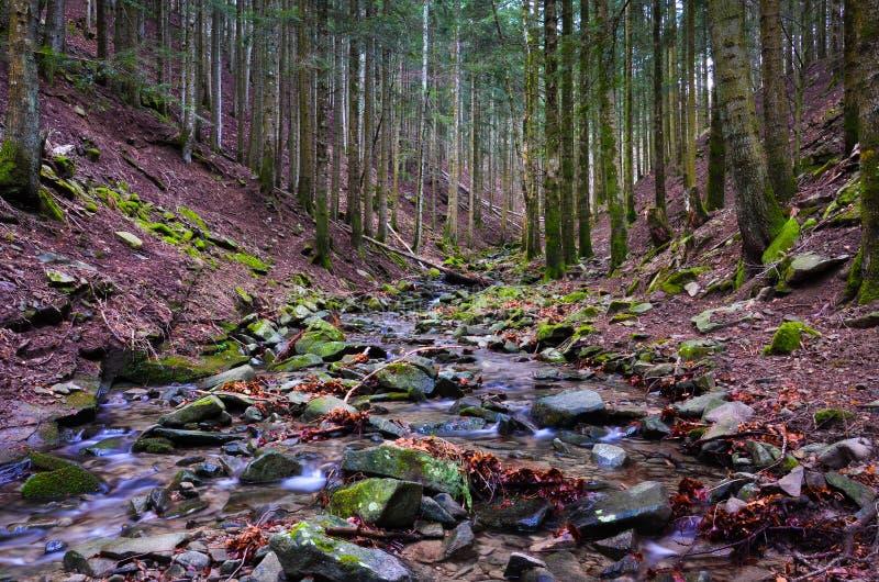 Forêt de Vallombrosa, torrent 1 image libre de droits