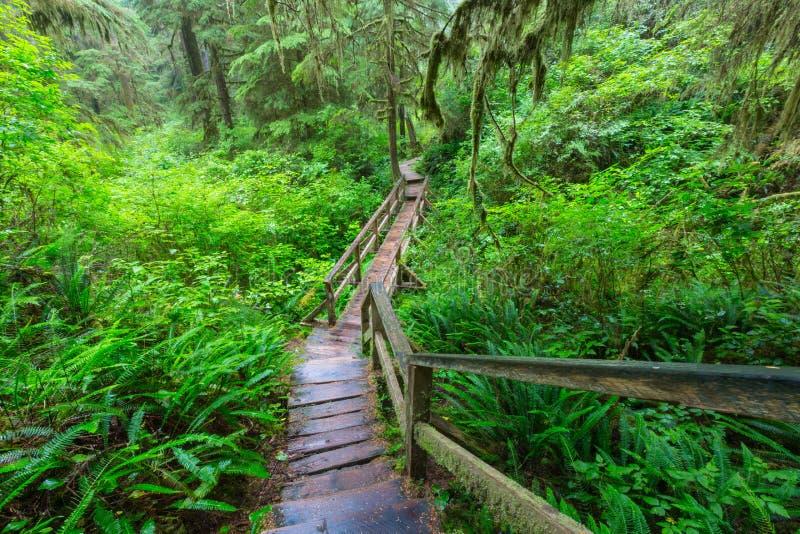 Forêt de Vancouver images stock