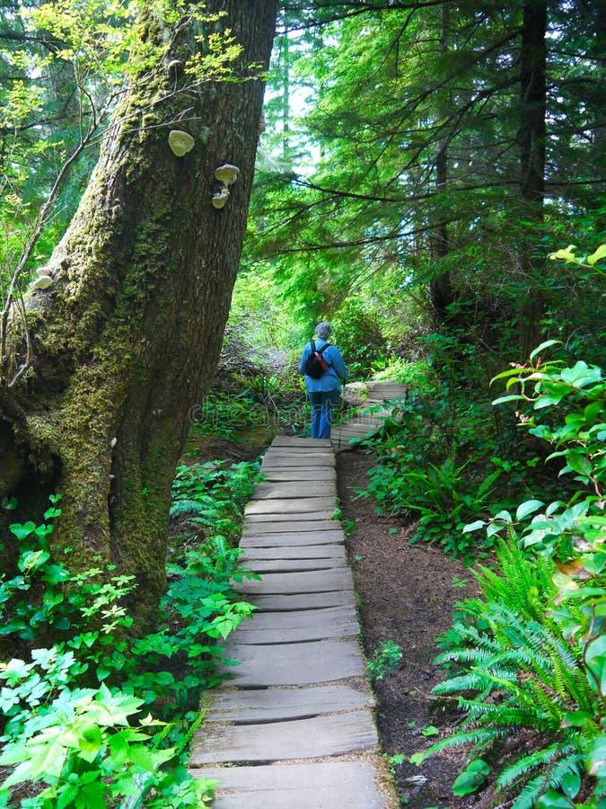 Forêt de vieil accroissement photos stock