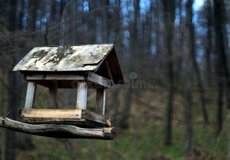 forêt de volière au printemps photo libre de droits