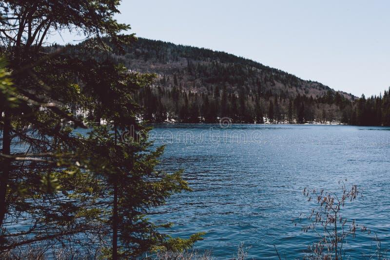 Forêt de vue et montagnes et neige étonnantes photographie stock libre de droits