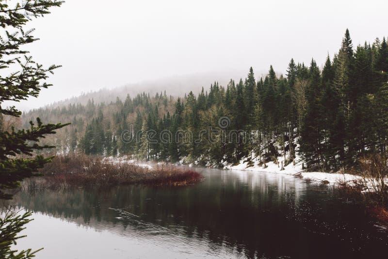 Forêt de vue et montagnes et neige étonnantes images libres de droits