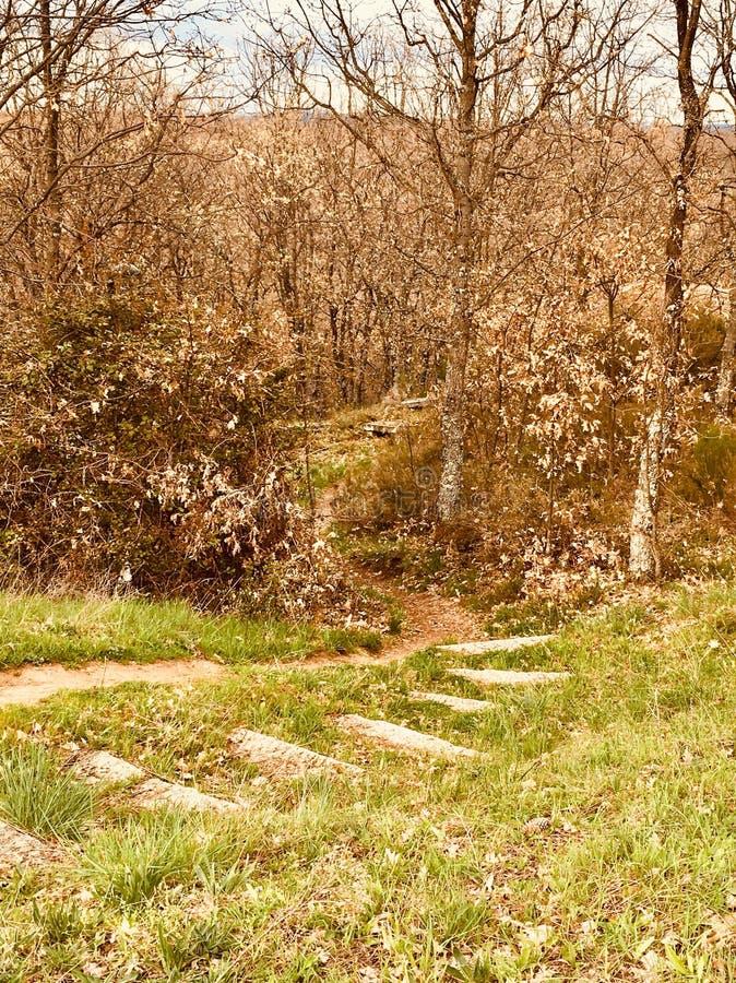 Forêt du nord photographie stock libre de droits
