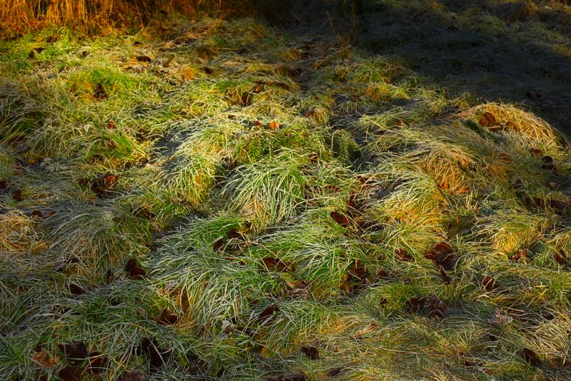 Forêt du nord-ouest Pacifique et herbe givrée photographie stock libre de droits