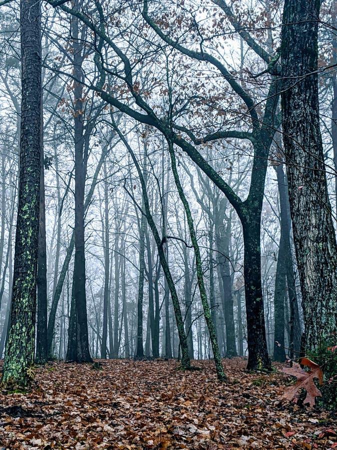 Forêt du soir en automne image stock