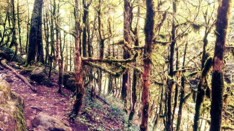 Forêt effrayante images libres de droits