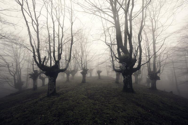 Forêt effrayante photos libres de droits