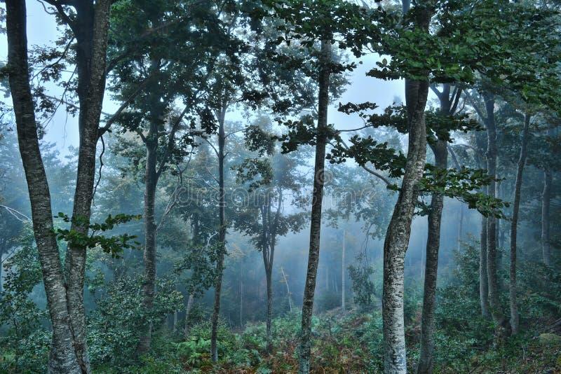 Forêt effrayante photographie stock libre de droits