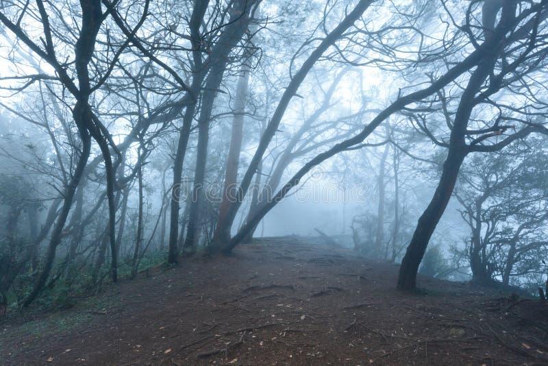 Forêt effrayante brumeuse en regain photo libre de droits