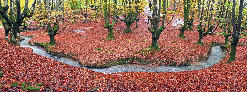 Forêt en automne avec un courant photos libres de droits