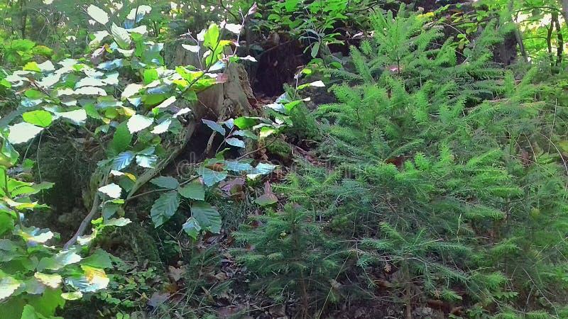 Forêt en automne tôt dans la ville de Rumia photographie stock libre de droits