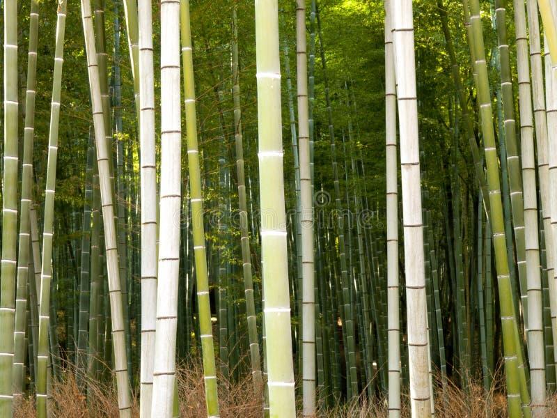 Forêt en bambou à Kyoto, Japon photo libre de droits
