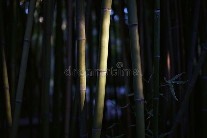 Forêt en bambou photo stock