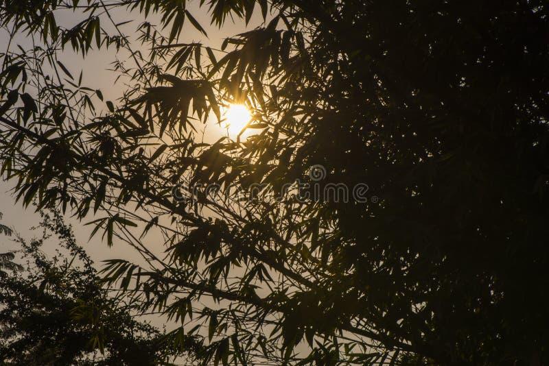 Forêt en bambou avec la lumière et ombre du soleil photos libres de droits