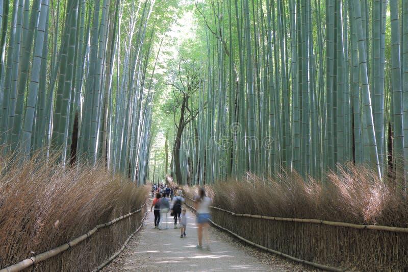 Forêt en bambou Kyoto Japon photos stock