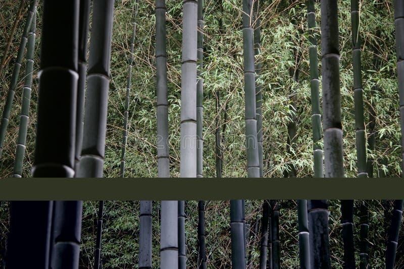 Forêt en bambou la nuit photos stock