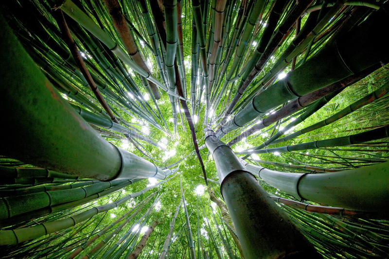 Forêt en bambou Maui image libre de droits