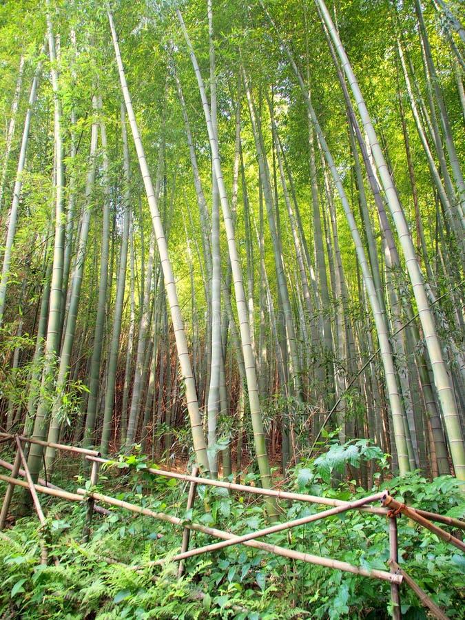 Forêt en bambou protégée par la barrière photographie stock libre de droits