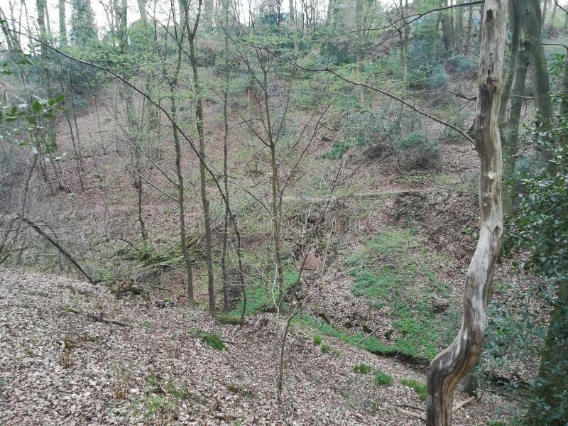 Forêt en bois images libres de droits