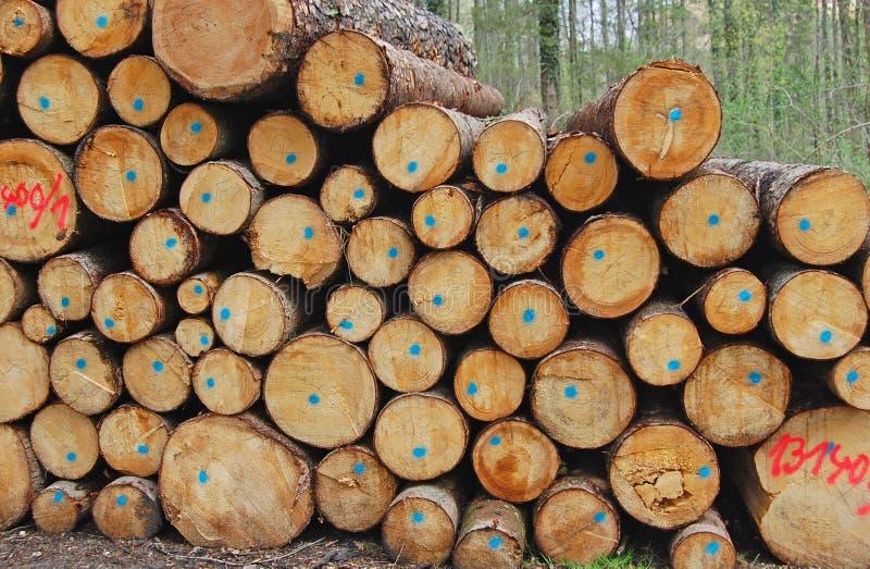 Forêt en bois d'identifiez-vous sur le fond images libres de droits