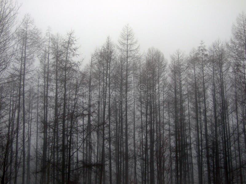 Forêt en brouillard images stock