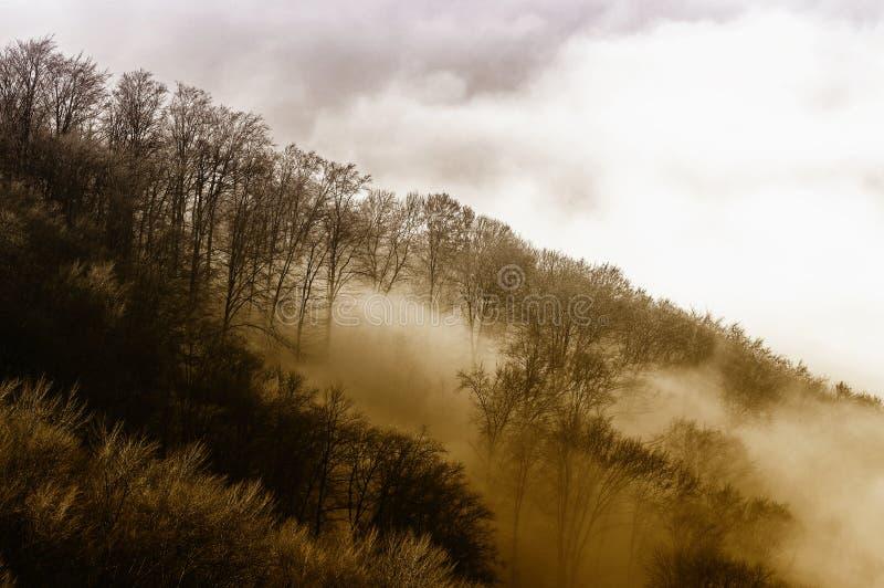 Forêt en brouillard image libre de droits